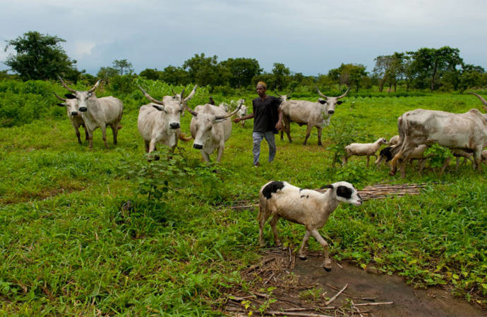 herdsmen-grazing, Myetti Allah