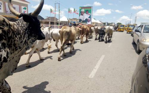 Herdsman, Ondo Community,
