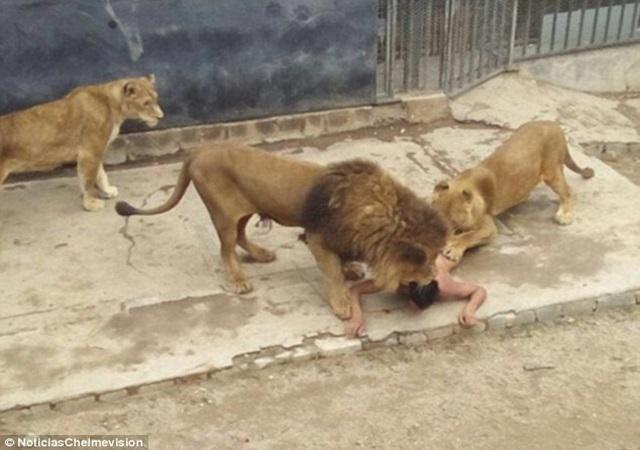 Suicide Mission, Lion
