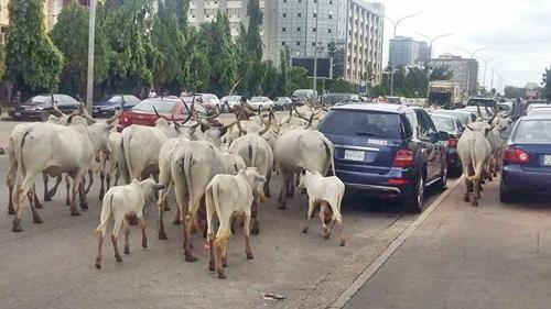Ekiti, fulani herdsmen, farmers, herders, UN
