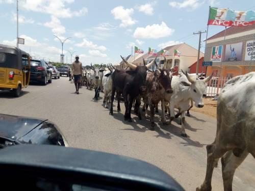Ohaneze, Herdsmen, cattle herders, Ondo state