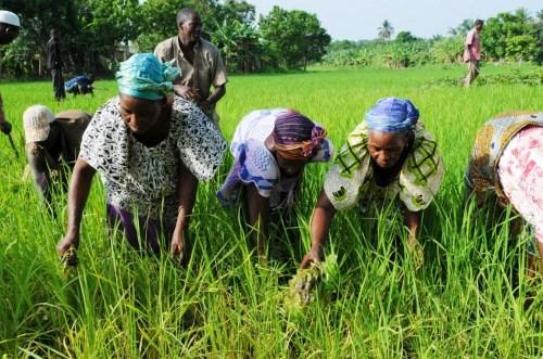 Kogi Farmers, World Bank,