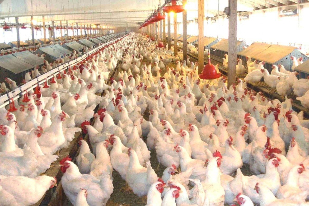 Poultry, Borders Closure,