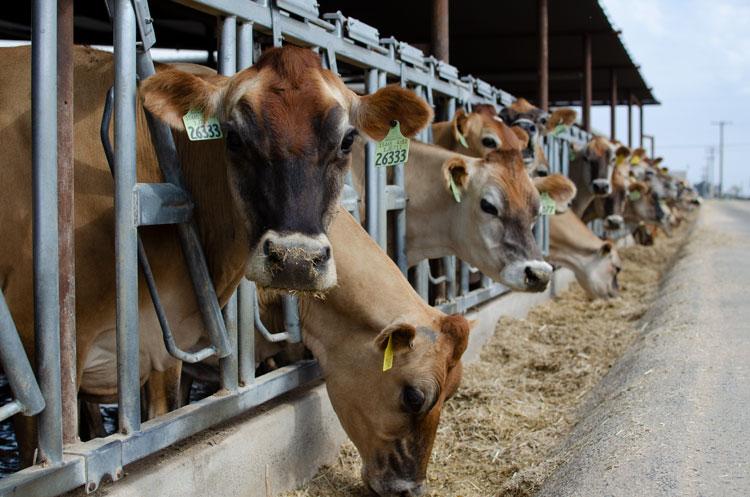 COWS, Ekiti, Promasidor, Gov Fayemi,